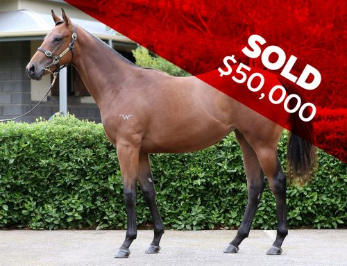 LOT 651 – CABLE BAY X MANZANILLA
