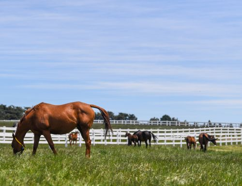 WOODSIDE OFFERS EXCEPTIONAL UNRESERVED BLOODSTOCK ONLINE